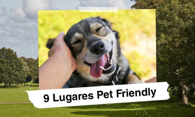 9 lugares 'pet friendly' que puedes visitar con tu mascota